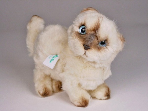 Piutre Stehende Perser Colourpoint Kitten 2434 ca.20cm Standing Himalayan Persian cat cm.20